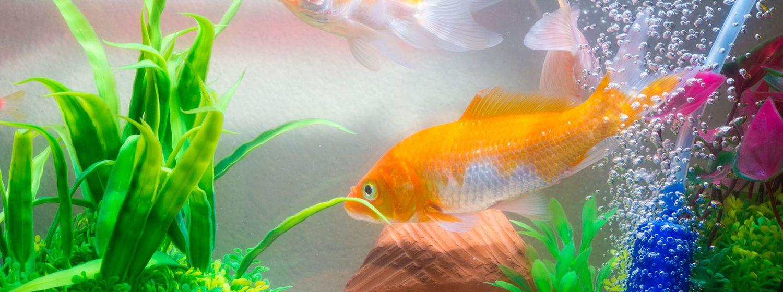 Filtrácia akvária: Druhy a vlastnosti filtračných médií