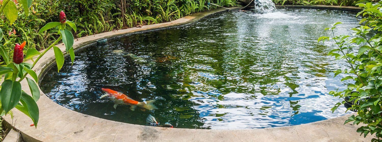 Čo by ste mali vedieť o údržbe jazierka počas leta